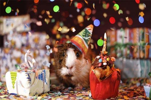 Geburtstage jeder Zeit